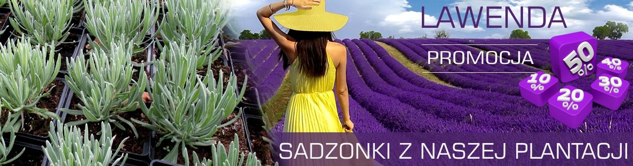 http://www.ogrodonline.com.pl/wyniki-wyszukiwania,2.html?sPhrase=lawenda&iProducer=&sPriceFrom=&sPri